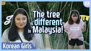The tree is different in Malaysia! |Kundasang |Blimey in KK Ep.12