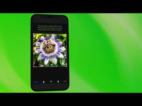 PlantSnap iPhone instructional video 2018