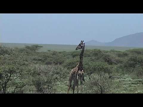 Ngorongoro-Serengeti, Tanzania