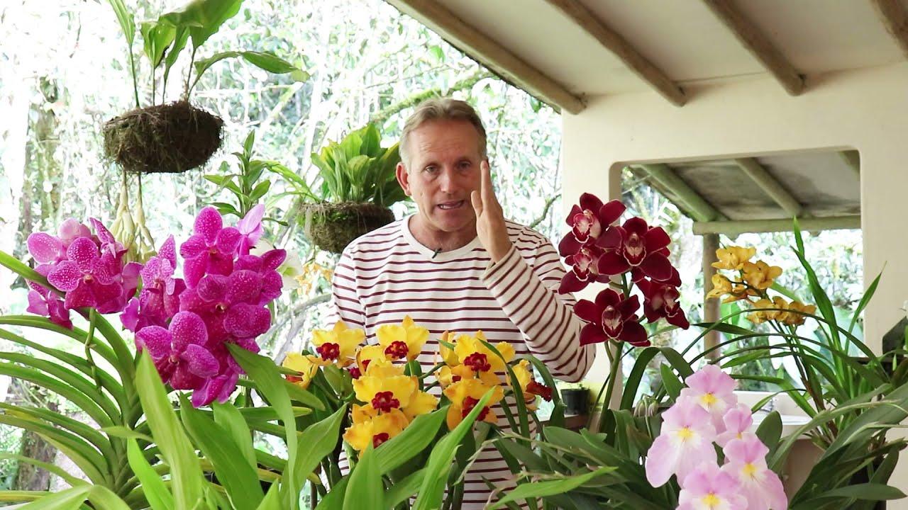 Aprende a cultivar tus orquídeas con Alma del Bosque