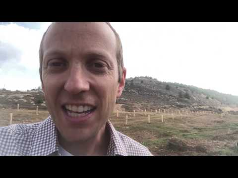 Fulfilling Prophecy By Planting Trees In Israel