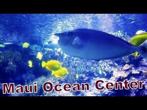 Hawaii Adventures 4 -- Visiting Maui Ocean Center