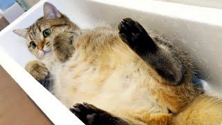 お腹がぷにぷにになった猫の体重を計ったら…!?