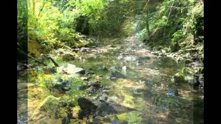 Bekken (The Brook) by Edvard Grieg, Hal Freedman, pianist.