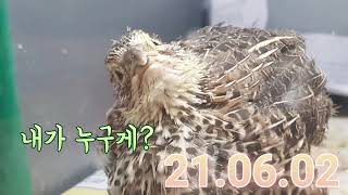 땅콩빵 21.06.02