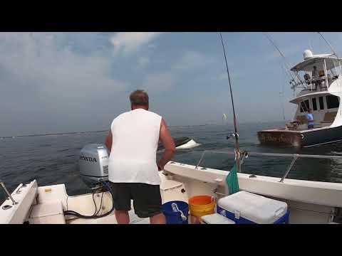 Whale capsizes NJ fishermen's boat