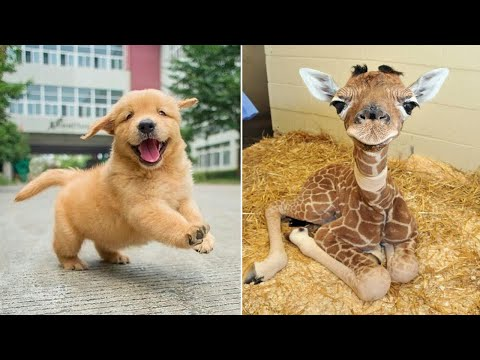 Baby Animals 🔴 Funny Cats and Dogs Videos Compilation (2019) Perros y Gatos Recopilación #11