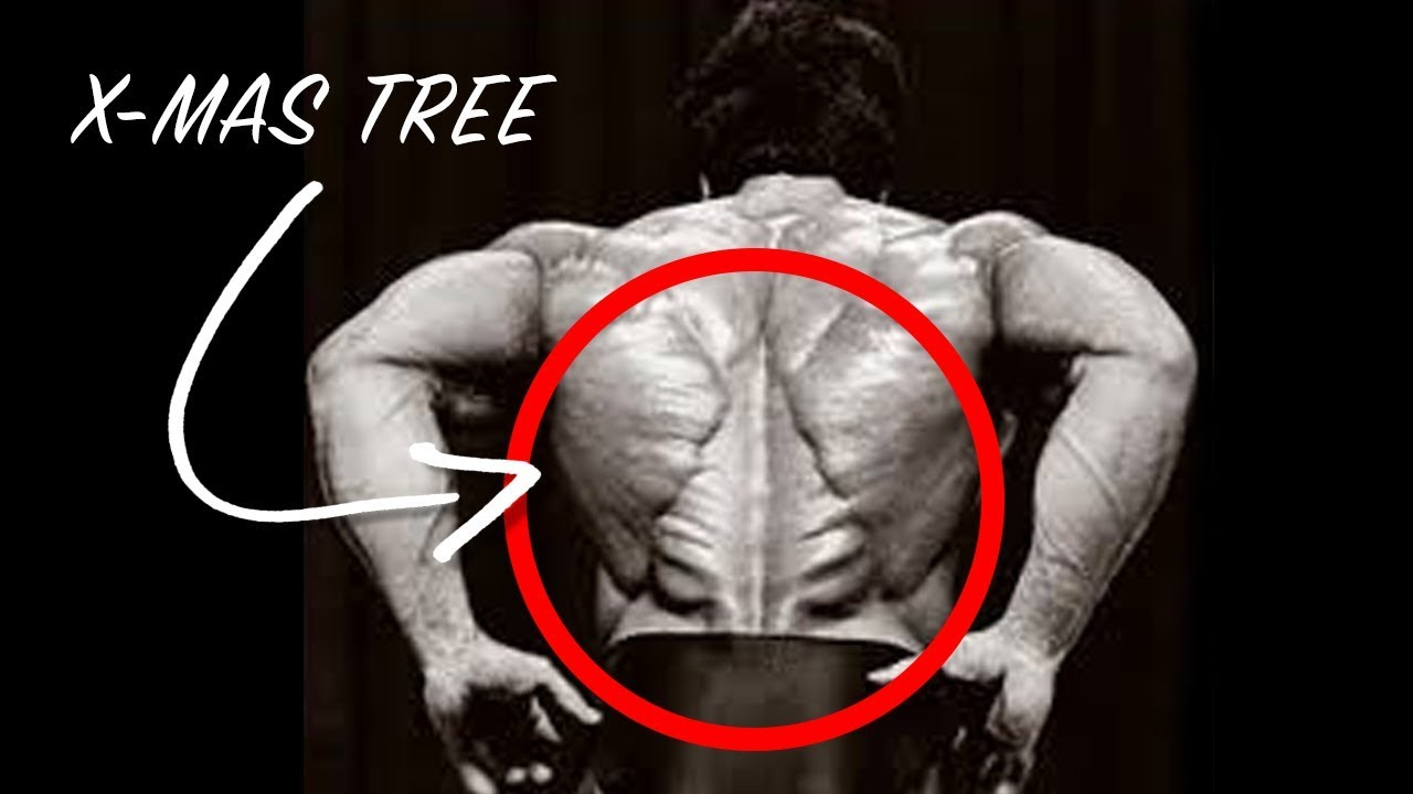 The Incredible Christmas Tree Muscle What Is It And How Do You Get