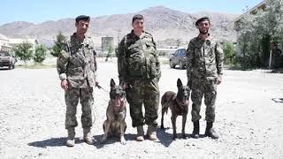 DFN:Military Working Dog Broll, AFGHANISTAN, 06.03.2018