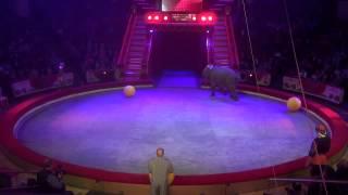 343 Аттракцион Корниловых 'Дрессированные слоны' 2013