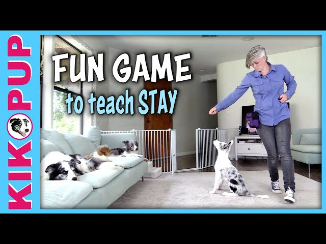 FUN GAME to teach STAY - Down stay sit stay