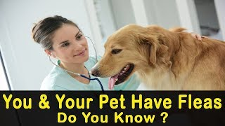 5 Signs You and Your Pet Have Fleas and Don't Know It