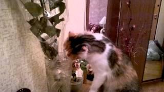 Не пропустите! Кошка пьет из вазы