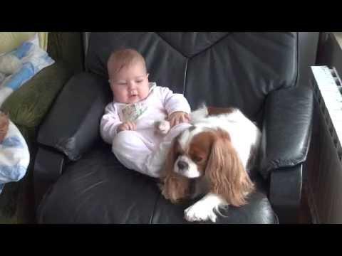 Cavalier King Charles Spaniel & Baby
