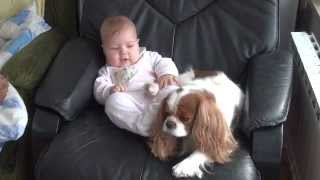 Cavalier King Charles Spaniel & Baby