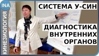 У-СИН. Диагностика внутренних органов. Прикладная кинезиология. Проф. Л.Ф.Васильева