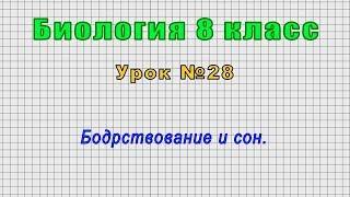 Биология 8 класс (Урок№28 - Бодрствование и сон.)