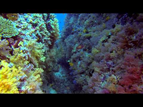 Epic scuba diving experience in North Male Atoll Maldives