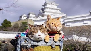 Have cats, will travel