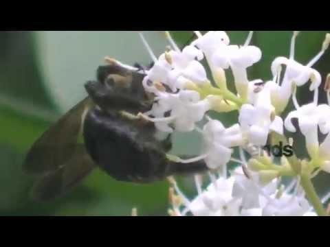 NC Nature News - Pollination