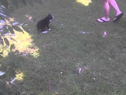 Cat hops/walks like a rabbit