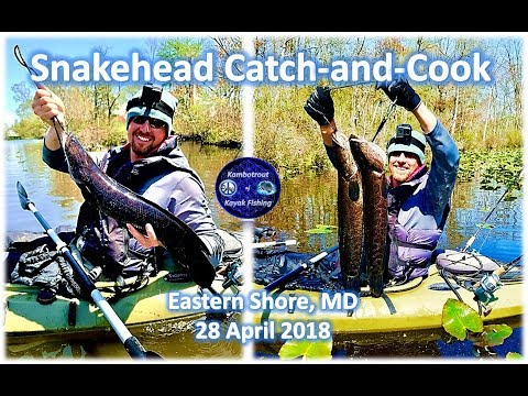 Maryland Snakehead Catch And Cook, Eastern Shore Fishing, 28 April 2018