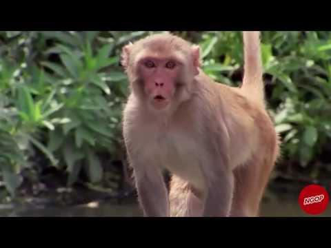 Kafshë që flasin - NGOP.TV