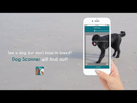 Dog Scanner: Discover your dog's breed