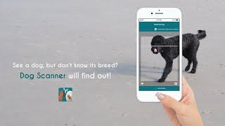 Dog Scanner: Identify your dog's breed