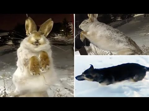 Dog and hare frozen SOLID as temperatures plummet to -56C in Kazakhstan