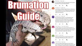 Tegu Brumation Guide!  Q&A