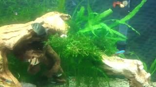 my 55 gallon planted aquarium