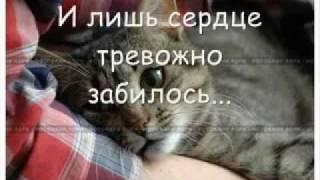 Как умирают кошки?...