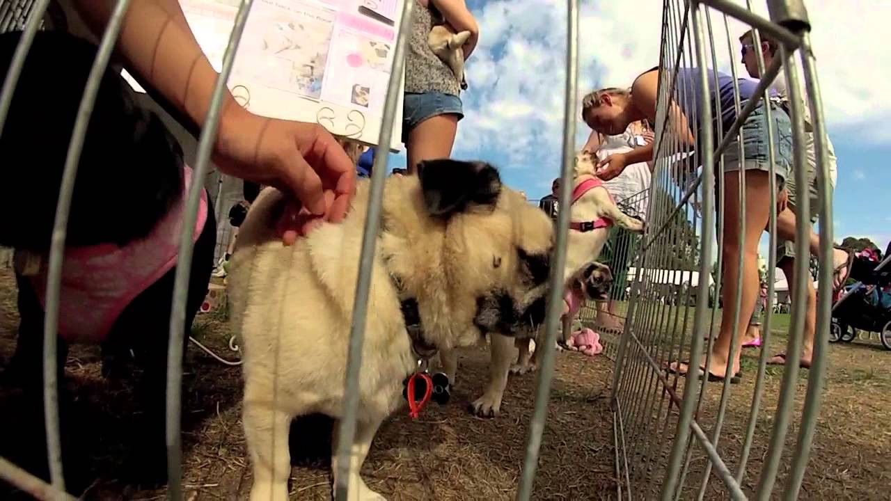 Pet Expo Ft Pug Rescue Victoria Vlog Gopro 3 Hd 2013 Youtube