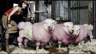 Немецкая машинка Liscop Super Profi 3000(Купить - http://usadba44.tiu.ru/p37185534-mashinka-dlya-strizhki.html Описание Для стрижки большого количества овец за сезон (от 150..., 2015-04-09T06:10:23.000Z)