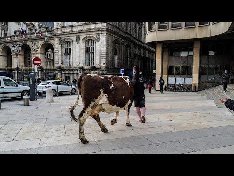 شاهد: مزارعون ومربو ماشية فرنسيون يتظاهرون مع أبقار في مدينة ليون الفرنسية…  - 05:56-2021 / 2 / 23