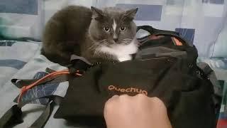 Кошка украла рюкзак