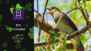 """Все о соловье. Цикл передач о животных птицах и природе """"Зеленая книга"""""""
