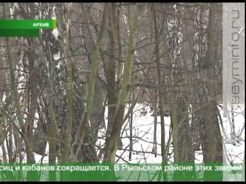 В каком регионе России больше всего живут Цыган???