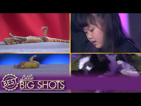 Jiaying Sends Animals to Sleep | Italy Little Big Shots
