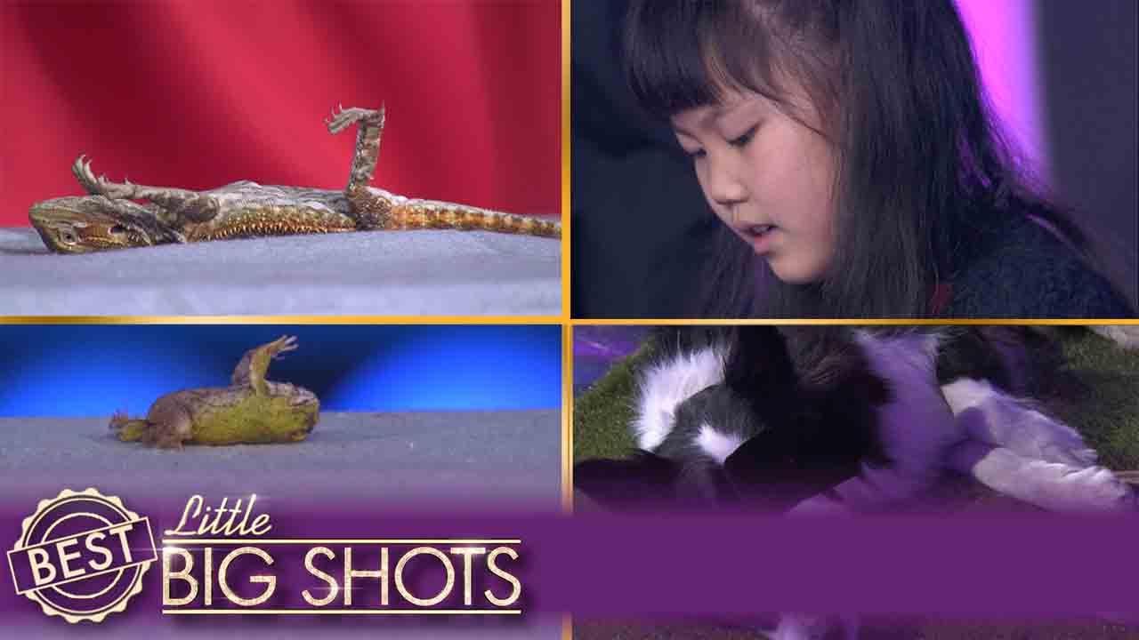 Little Big Shots | Jiaying Sends Animals to Sleep