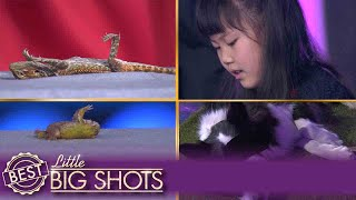 Little Big Shots | Jiaying Sends Animals to Sleep