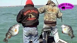 Catching JUMBO Perch Fishing Lake Michigan - HawgNSonsTV