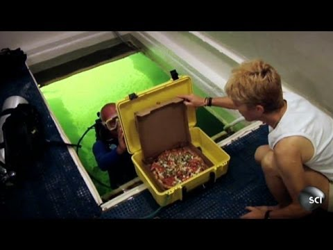 Video Of The Week | Scuba-Diving Pizza Delivery Man | World's Strangest