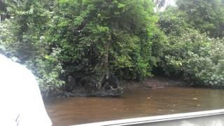 Chimp Island Video 1