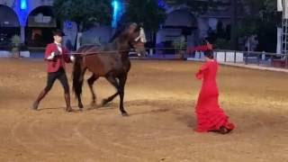 Испанская красавица и андалузский жеребец