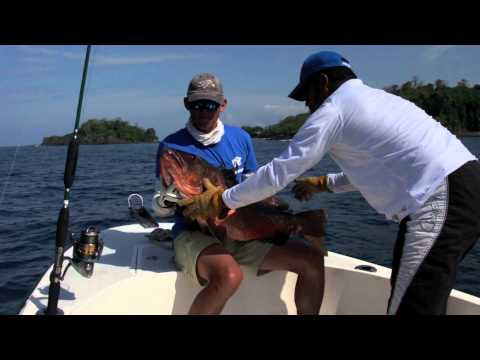 FISH FINDER    POPPING FOR BIG FISH / TOPWATER  ACTION