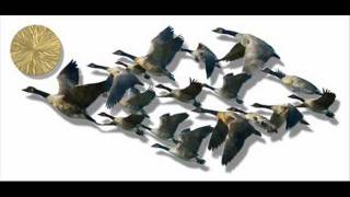 Canada Geese Migration By Ash Carl.wmv