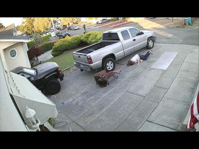 Dos pitbulls casi despedazan a un gato que se relajaba fuera de su casa