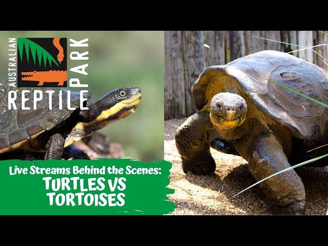 LIVE: TURTLES VS TORTOISES   AUSTRALIAN REPTILE PARK